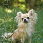 Diddy Dogs Lodge, Dog Walking Gosport